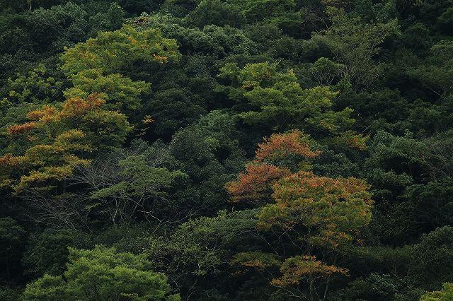 IMG_5121杉安峡の紅葉
