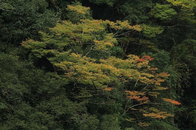 IMG_5122杉安峡の紅葉