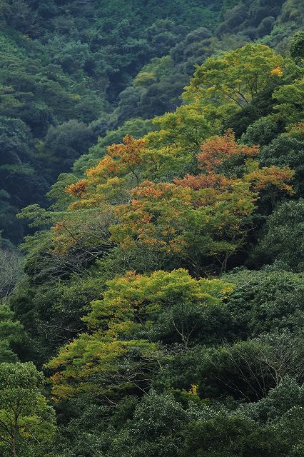 IMG_5125杉安峡の紅葉