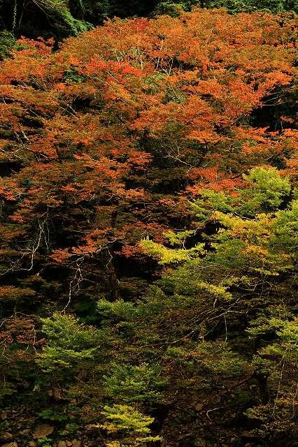 IMG_5132杉安峡の紅葉