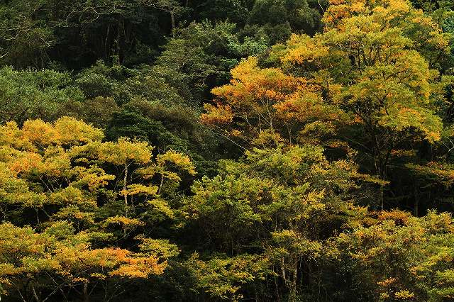 IMG_5137杉安峡の紅葉