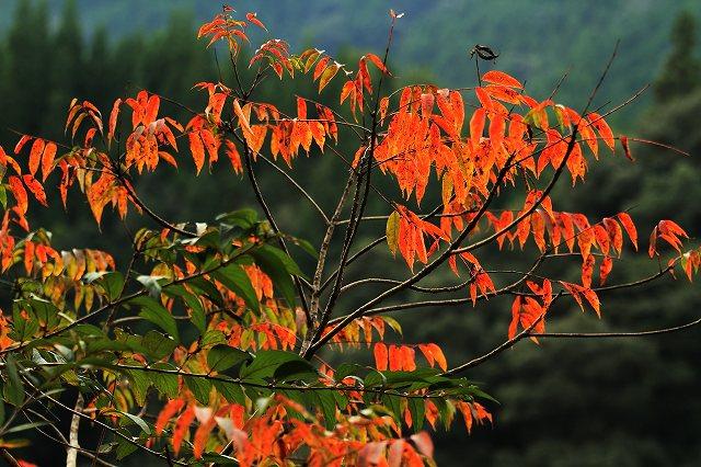 IMG_5138杉安峡の紅葉