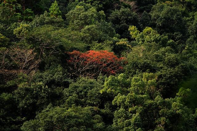 IMG_5111杉安峡の紅葉