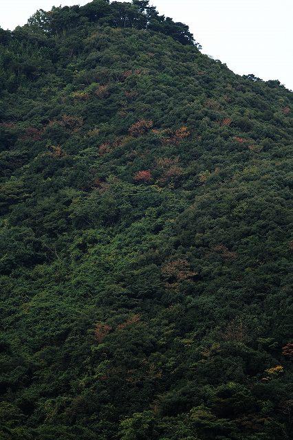 IMG_5164杉安峡の紅葉