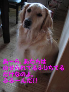 IMG_0476-1.jpg