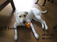 hana_20090523151650.jpg