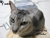 yume_20090523151716.jpg