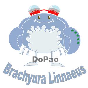 Brachyura Linnaeus カニ オリジナルデザイン