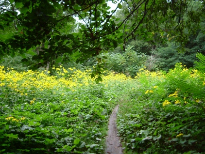 遺跡保存庭園2