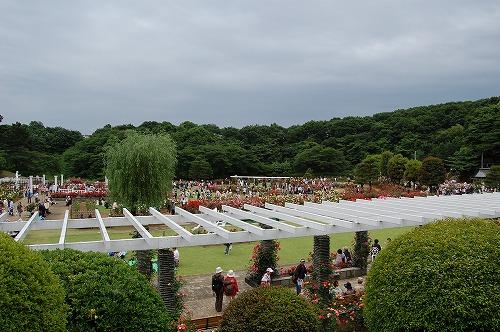 09生田緑地バラ園1