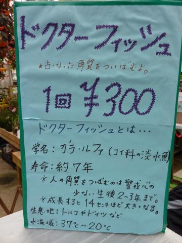 P1020491_convert_20100131225242.jpg