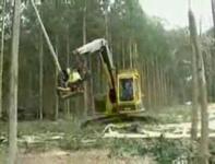 いともたやすく木を伐採し解体していく特殊車両