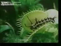 食虫植物がいろんな生物を捕食する瞬間映像