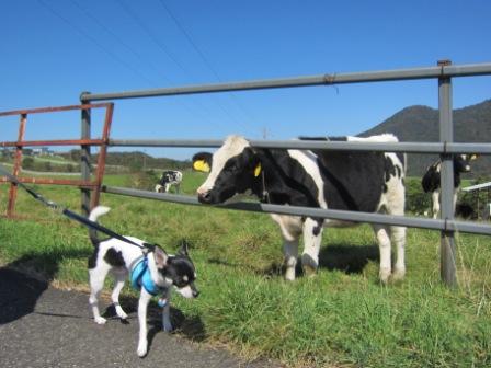 牛がら仲間