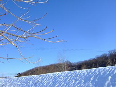 2007_01090057s.jpg