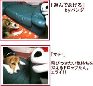 imagepanda1.jpg