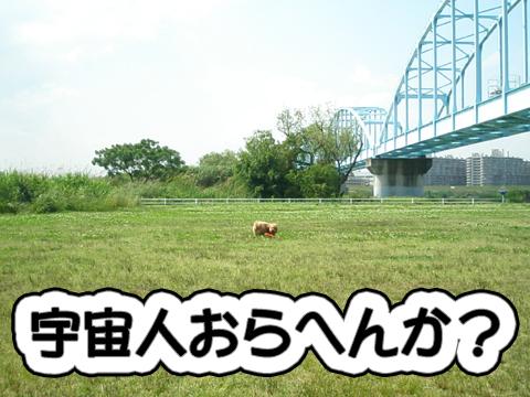 11_20090602045816.jpg