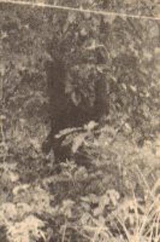 ヒバゴン1