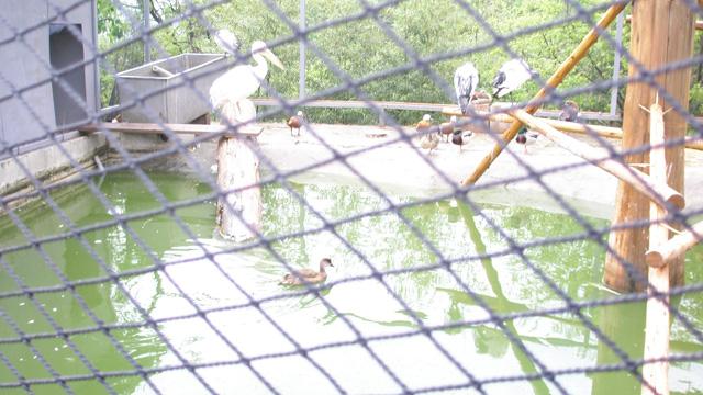 20090430水鳥