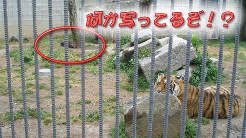 20090430犬虎1