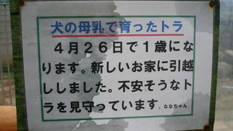 20090430犬虎4