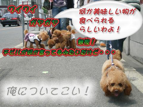 P5010042_20090506152542.jpg