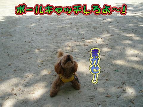 P5120121.jpg