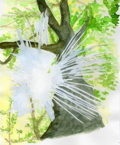 光りの中の樹