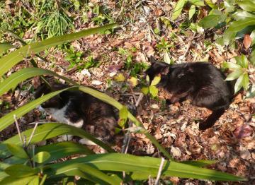 080108cats1.jpg