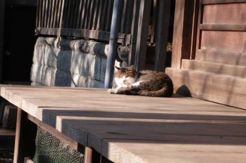 080115cats-2.jpg