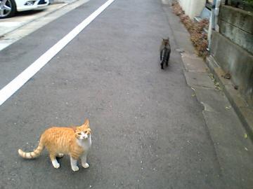 080121cats.jpg