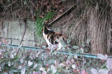 080122cats7.jpg
