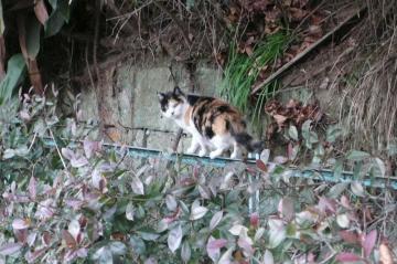 080122cats8.jpg