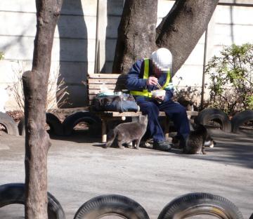 080124cats1.jpg