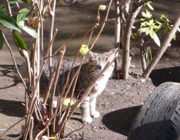 080124cats2.jpg