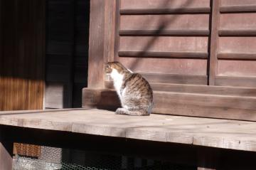 080131cats1.jpg
