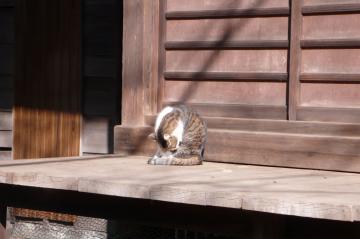 080131cats2.jpg