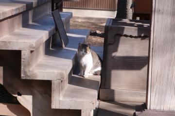 080131cats4.jpg