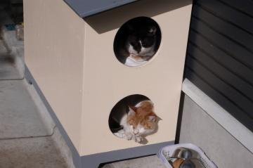 080131cats5.jpg
