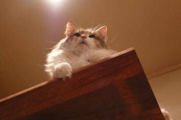 080202cats1.jpg