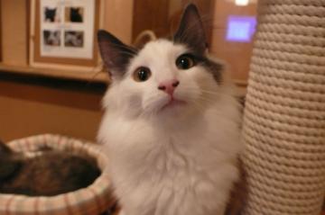 080202cats2.jpg