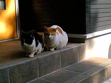 080205cats.jpg