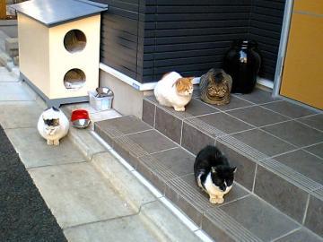 080218cats.jpg