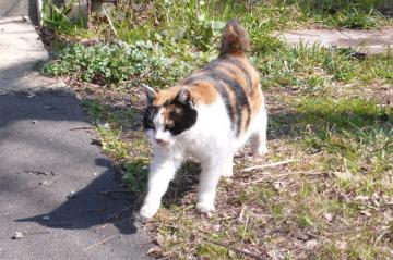 080229cats2.jpg