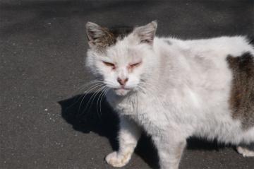 080229cats3.jpg