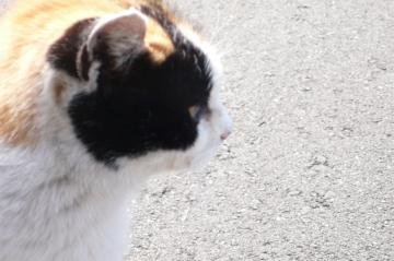 080229cats4.jpg
