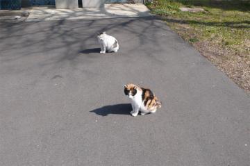 080229cats5.jpg