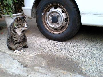080318cats1.jpg