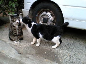080318cats2.jpg
