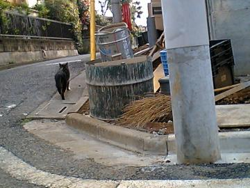 080318cats4.jpg